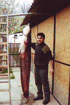 Mészáros Sándor_harcsa 58kg-198cm_2008