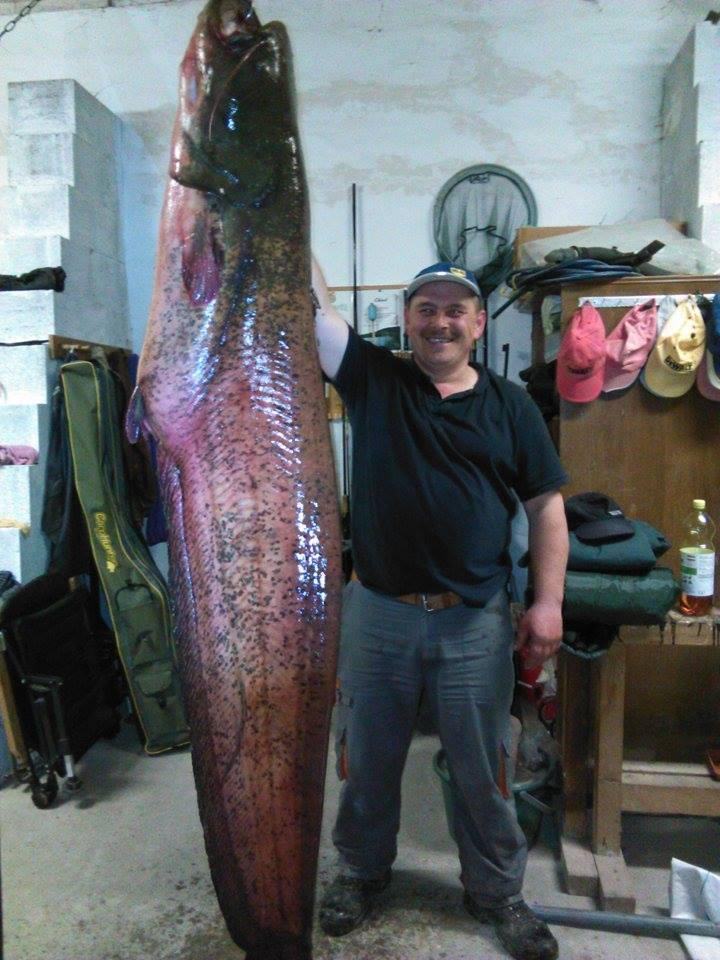 harcsa 65kg-200cm